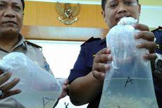 Disimpan di Koper, Ribuan Bibit Lobster Akan Diselundupkan ke Singapura
