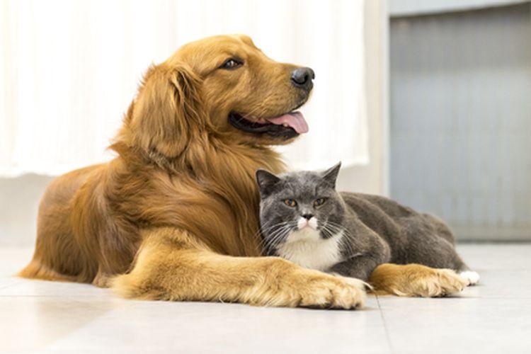Ilustrasi anjing dan kucing.