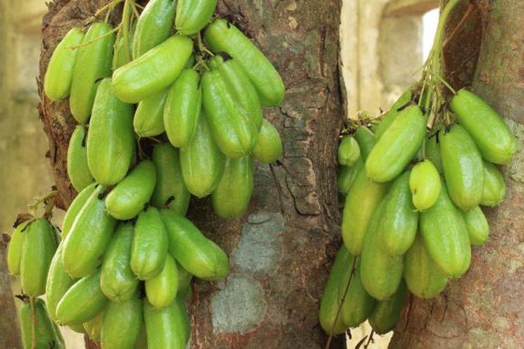 Ilustrasi: belimbing wuluh menjadi salah satu bahan bumbu yang banyak didapatkan di Indonesia.