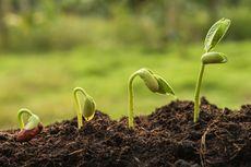 Soal UAS Biologi: Pengaruh Cahaya pada Pertumbuhan Tumbuhan