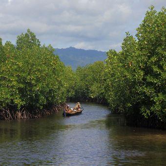 Hutan mangrove di Desa Torosiaje yang dikelola masyarakat tumbuh lestari. Kawasan ini diusulkan Pemerinrah Provinsi Sebagai Kawasan Ekosistem Esensial