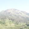 Penelusuran Jejak Keberadaan Tumbuhan Langka di Gunung Ungaran