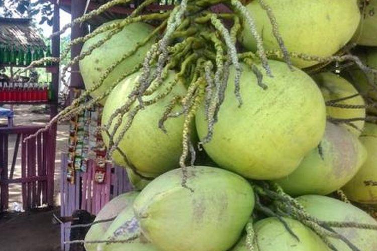 ilustrasi buah kelapa