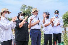 BRGM Siap Percepat Penanaman Mangrove di 9 Provinsi