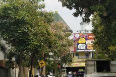 Tak Hanya di Surabaya, Tabebuya Juga Ada di Lamongan dan Mulai Bermekaran