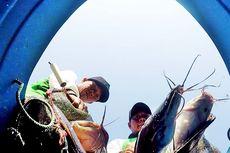KKP Melalui BRSDM Kembangkan Budidaya Ikan Lele Mutiara