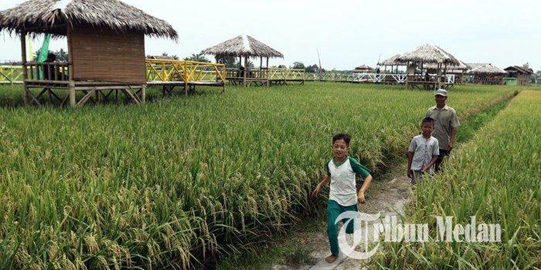 Sejumlah warga mengunjungi obyek Kampung Wisata Sawah, Desa Pematang Johar, Deliserdang, Sabtu (8/2/2020). Wisata sawah yang dibangun oleh Pemerintah Desa tersebut menjadi destinasi wisata alternatif bagi masyarakat.