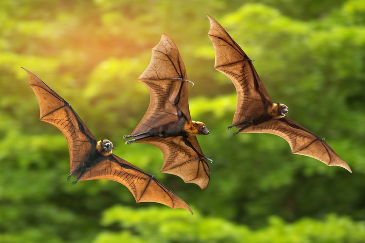 Ilustrasi kelelawar