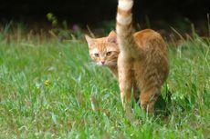 Jangan Kesal jika Kucing Menunjukkan Bokong, Ternyata Ini Artinya