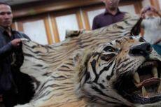 Polisi Lampung Gagalkan Penjualan Kulit Harimau