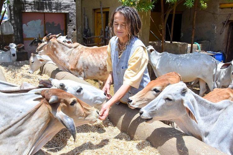 Warga negara Jerman Friederike Irina Bruening yang juga dikenal sebagai Sudevi Mataji, dikeliling sapi-sapi  di desa Radhakund di distrik Mathura, negara bagian Uttar Pradesh, India,  Senin (27/5/2019). (AFP)