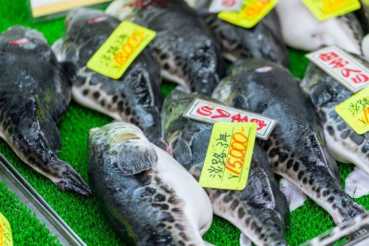 Ikan buntal atau fugu, ikan beracun yang kerap kali dijadikan sashimi.