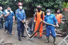Dalam Sehari, Damkar Dua Kali Evakuasi Ular Sanca di Rumah Warga Jakbar