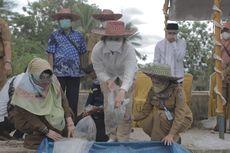 Jaga Kelestarian Ikan Endemik, Kementerian KP Kembangkan Pembenihan Ikan Gabus di Kalsel