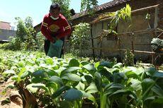 Mengintip 'Kebun Ceria', dari Lahan Angker hingga Penyelamat Dompet Warga di Mojokerto