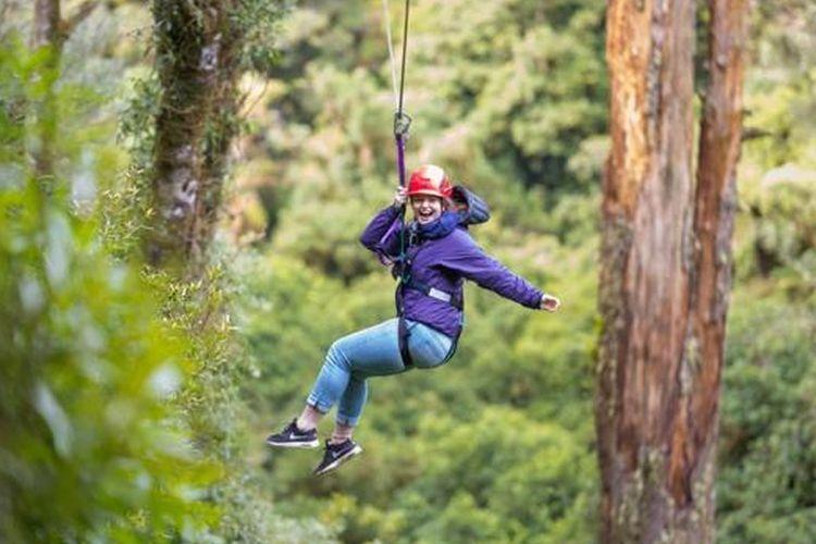 Bermain flying fox melintasi pepohonan dan terhubung kembali dengan alam dengan mengikuti tur Kanopi Rotorua