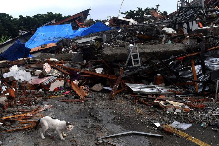 Seekor kucing melintas di dekat bangunan yang roboh akibat gempa bumi magnitudo 6,2 di Mamuju, Sulawesi Barat, Sabtu (16/1/2021). ANTARA FOTO/Sigid Kurniawan/rwa.
