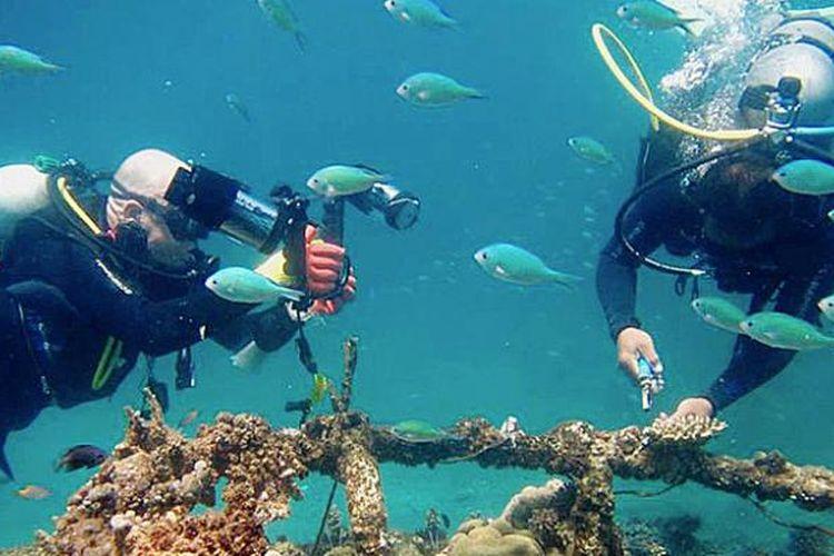 Wisatawan menyelam di kawasan Pantai Pemuteran di Kabupaten Buleleng, Bali, yang terkenal dengan keindahan terumbu karang dengan sistem biorock, Agustus lalu. Kehidupan alam bawah laut ini dijaga sejumlah pecalang segara bentukan swadaya desa setempat. Mereka sadar lingkungan dan melestarikan terumbu karang dari tangan-tangan tak bertanggung jawab.