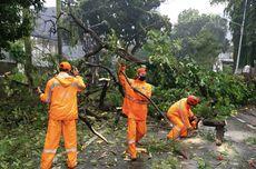 Hujan Deras, Motor Pengemudi Ojol Rusak Berat Tertimpa Pohon Tumbang