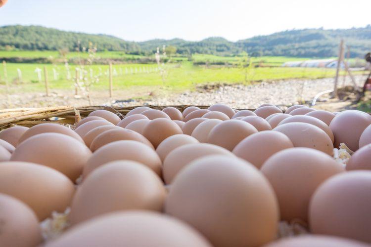 Ilustrasi telur free range