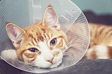 Penyebab, Tanda-tanda, dan Cara Merawat Kucing Demam