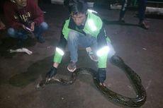 Warga Pamulang Tangkap Ular Sepanjang 3,5 Meter yang Bersarang di Dalam Kasur