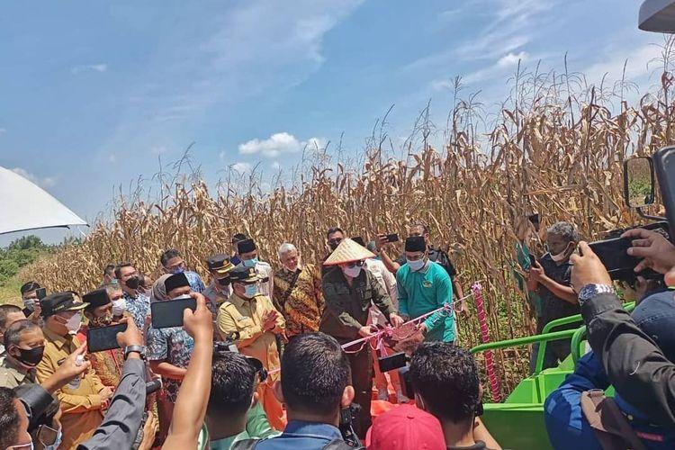 Wakil Menteri Pertanian (Wamentan) Republik Indonesia (RI) Harvick Hasnul Qolbi melakukan kunjungan sekaligus panen jagung di desa Agrowisata, Kota Pekanbaru, Riau.