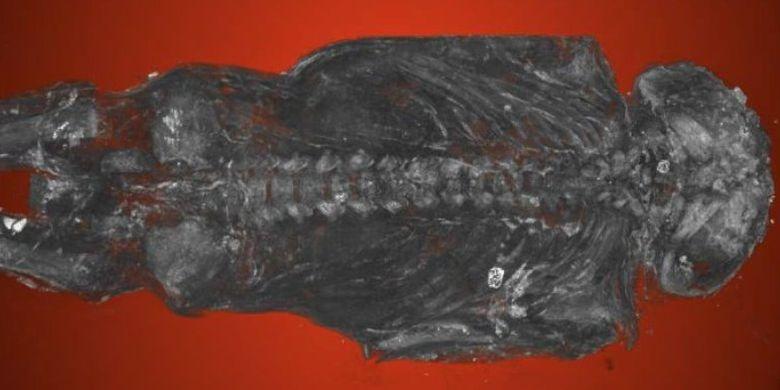 Dikira mumi burung, ternyata ini adalah janin berusia 22 sampai 28 minggu yang dimumikan