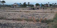 Ikut Program AUTP, Petani Jombang Ungkap Keuntungan yang Dirasakan