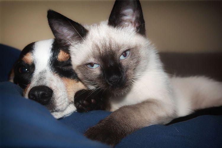 Ilustrasi kucing dan anjing.