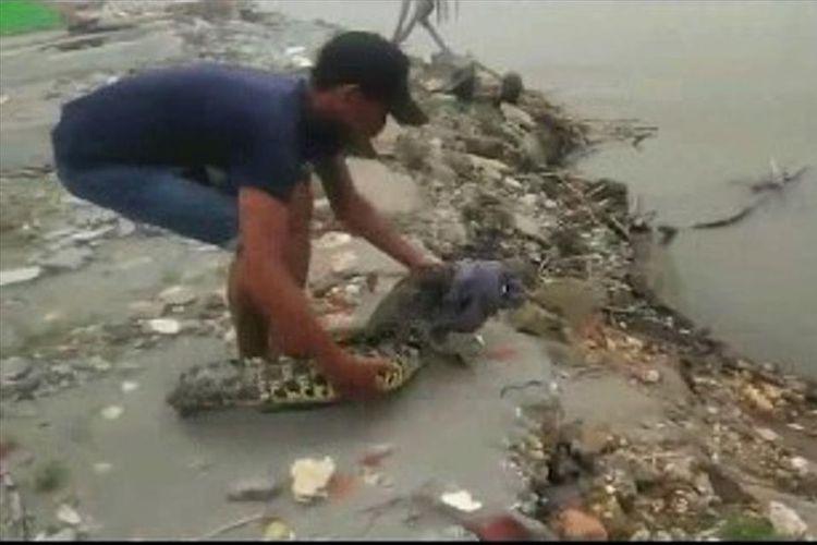 Buaya 1,5 meter yang masuk ke pemukiman warga dilepaskan kembali ke Sungai Lariang, Senin (15/7/2019).