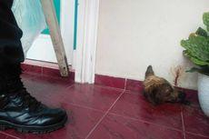 Kronologi Rumah Kasi Penkum Kejati Riau Dilempari Potongan Kepala Anjing