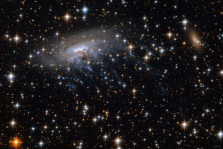 Galaksi ESO 137-001 yang berbentuk seperti ubur-ubur.