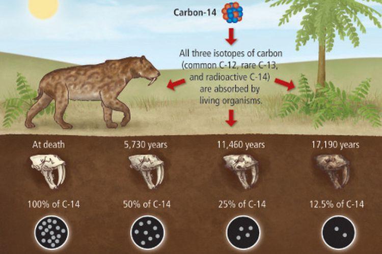 Metode carbon dating untuk menentukan umur fosil dari pengukuran waktu paruh karbon-14.