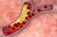 Pengertian dan Fungsi Pembuluh Arteri