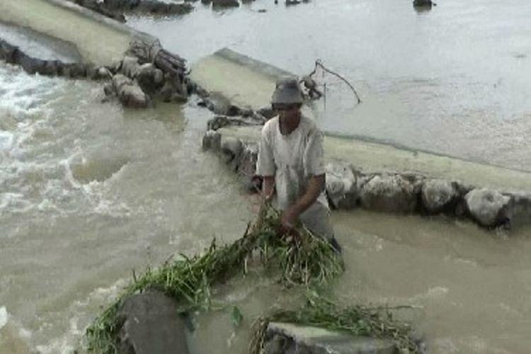 Saluran irigasi primer jebol ratusan hektar lahan pertanian yang  baru beberapa minggu ditanami padi mati terseret banjir bah, Senin (11/7).