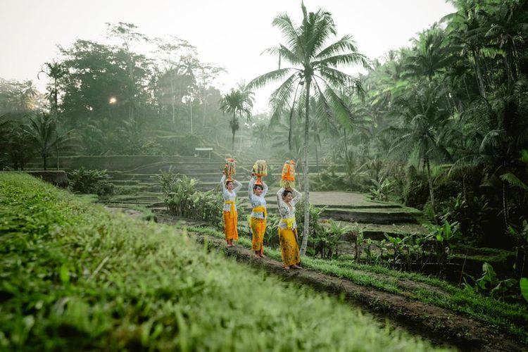 Ilustrasi situs warisan dunia di Indonesia yaitu Sistem Subak Bali.
