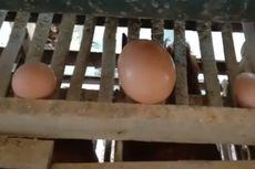 Fakta Telur Ayam Jumbo, Berisi Telur Lagi Saat Dipecahkan dan Pemilik Keheranan