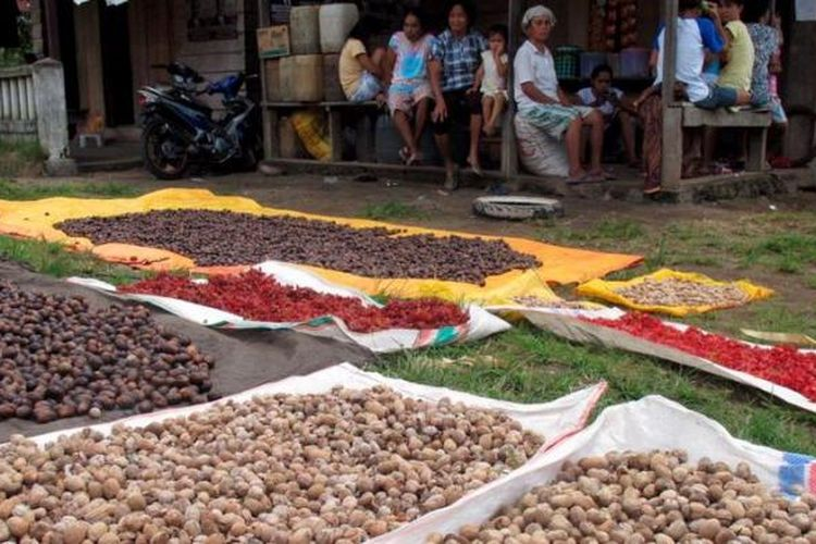 Biji dan bunga pala dijemur warga Desa Gamtala, Kecamatan Jailolo, Maluku Utara, Sabtu (18/5/2013). Rempah-rempah seperti pala dan cengkeh merupakan produk utama yang dihasilkan di daerah tersebut.