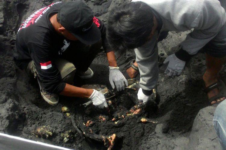 Para peneliti dari Fakultas Biologi UGM dan relawan dari WWI Yogyakarta membongkar kubur penyu di Pantai Congot, Kulon Progo. Mereka hendak  memastikan keterkaitan sampah dengan kematian penyu, Senin (17/12/2018).