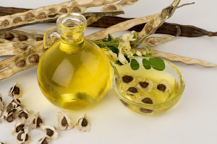 Ilustrasi minyak biji kelor