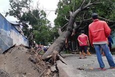 Cerita Emak Eka, Penjual Kopi yang Selamat dari Tumbangnya Dua Pohon Besar