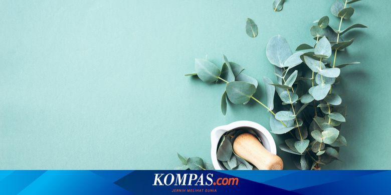 INRU Toba Pulp Gandeng USU, Olah Daun Eucalyptus menjadi Hand Sanitizer