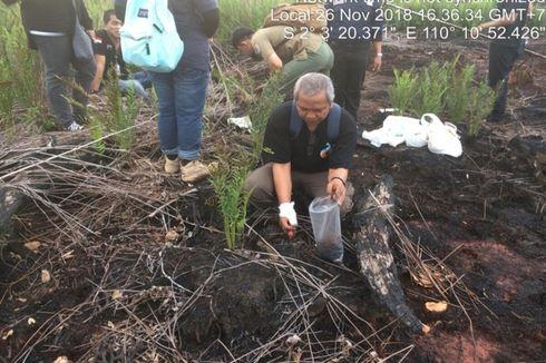 PT Pranaindah Gemilang Didenda Rp 238 Miliar Terkait Karhutla di Ketapang