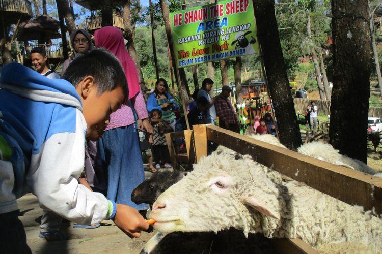 Seorang Anak memberi makan domba di Lawu Park