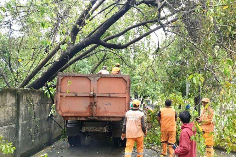 Pohon tumbang akibat hujan deras disertai angin kencang di kawasan Semper Timur Jakarta Utara, Jumat (26/2/2021) dini hari.