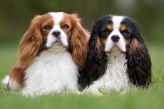 Kenapa Anjing Diare? Ini Penyebab, Gejala, dan Pencegahannya