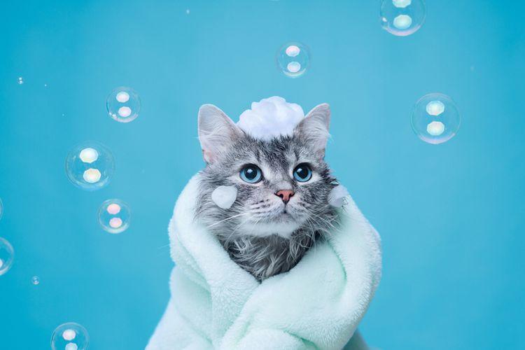 Ilustrasi memandikan kucing, kucing mandi, kucing.