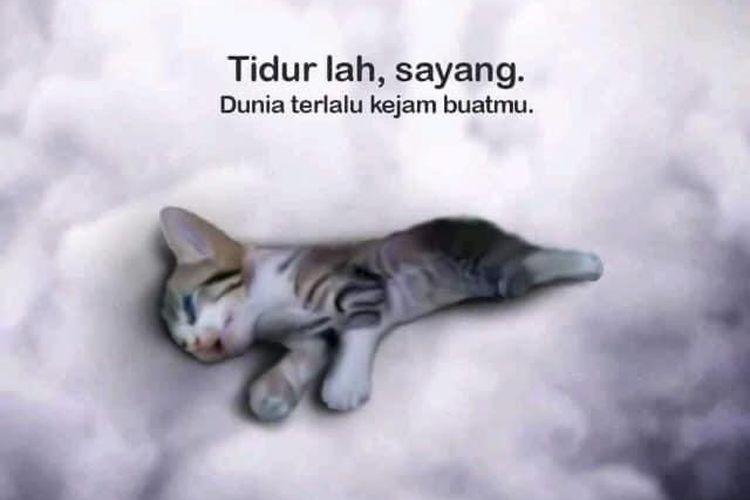 Foto anak kucing yang mati setelah dianiaya dan diinjak-injak oleh 3 perempuan di Malaysia.