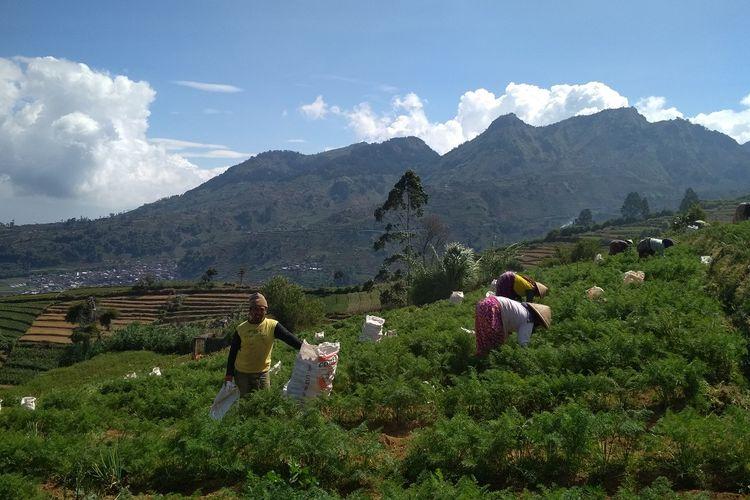Lahan pertanian milik warga di jalur pendakian Gunung Prau via Igirmranak, Wonosobo, Jawa Tengah.